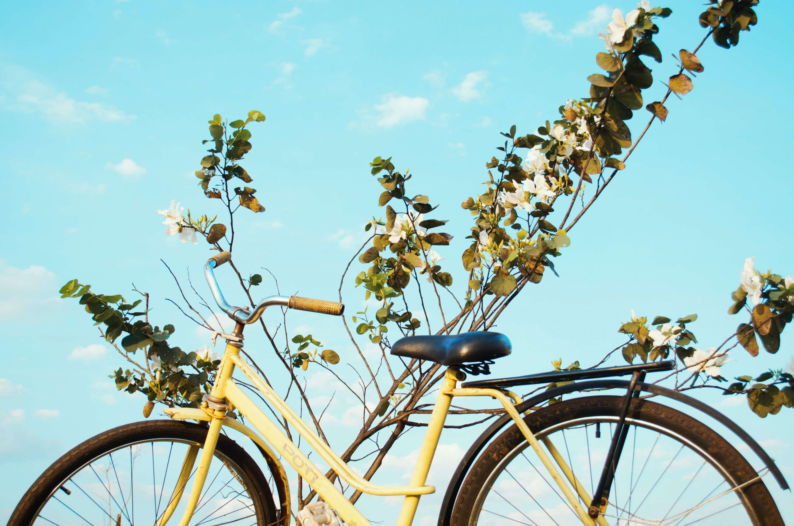 fun things to do outside feature image bicycle