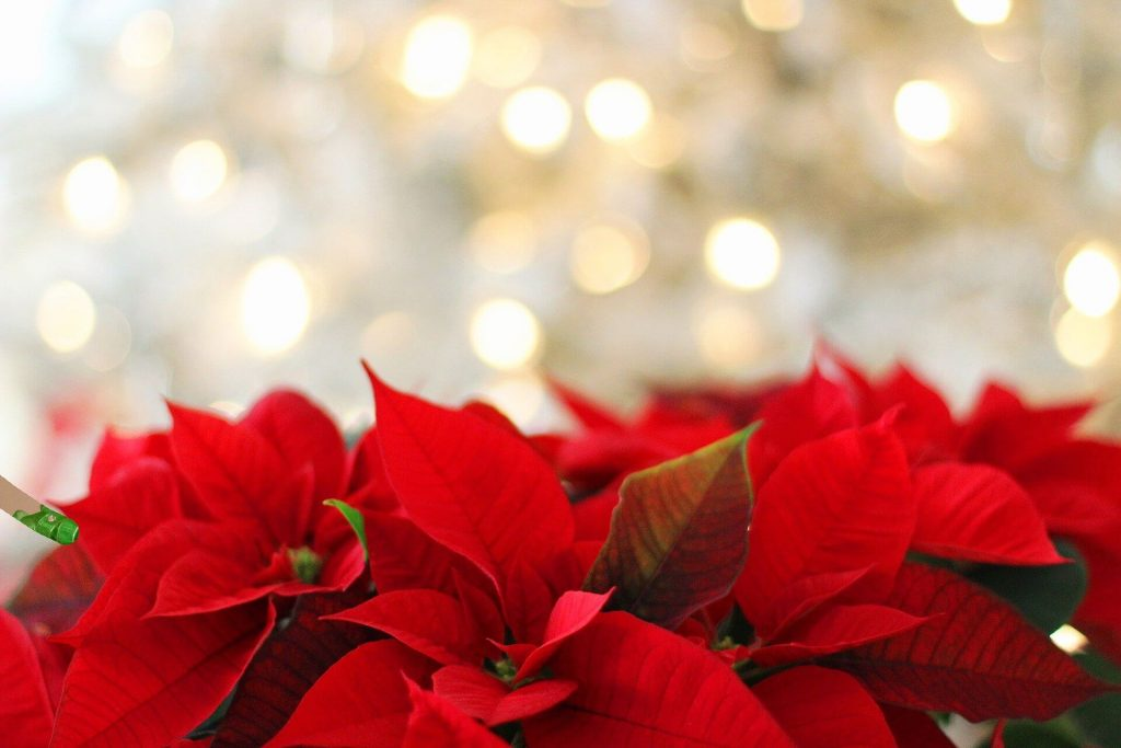floral-wedding-centrepieces-for-Christmas